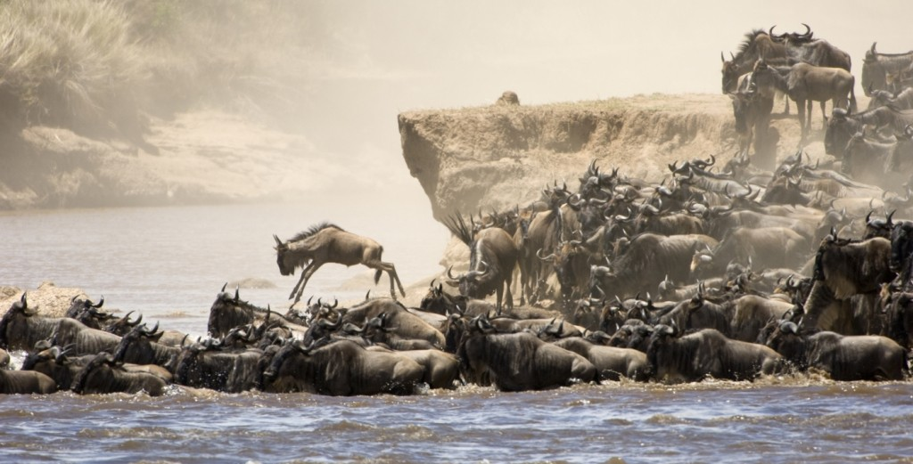 tansania great migration